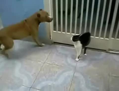 cat, saber, saber cat GIFs