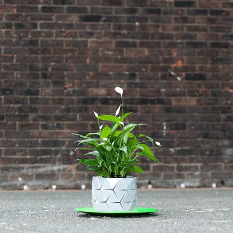 Watch and share Lifestyle GIFs and Plant Pot GIFs on Gfycat