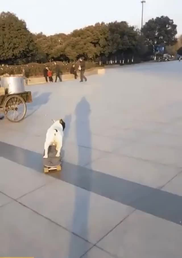 Watch and share He Can Steer On His Own... GIFs by likkaon on Gfycat