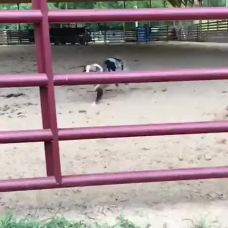 trough the gate GIFs