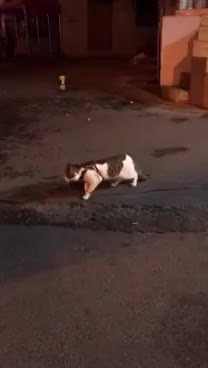 Dog, between, cat, fight, prevents, street, A dog prevents a fight of cats GIFs