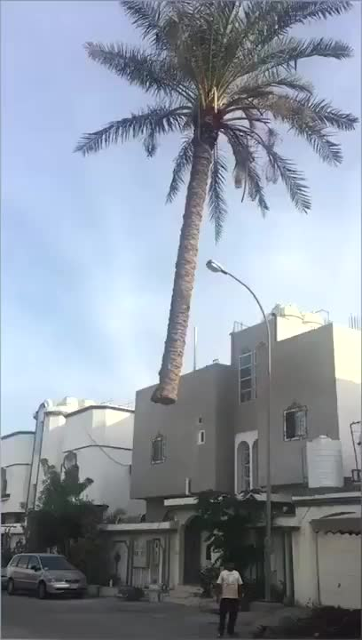 Watch and share Floating Palm Tree GIFs by KSG on Gfycat
