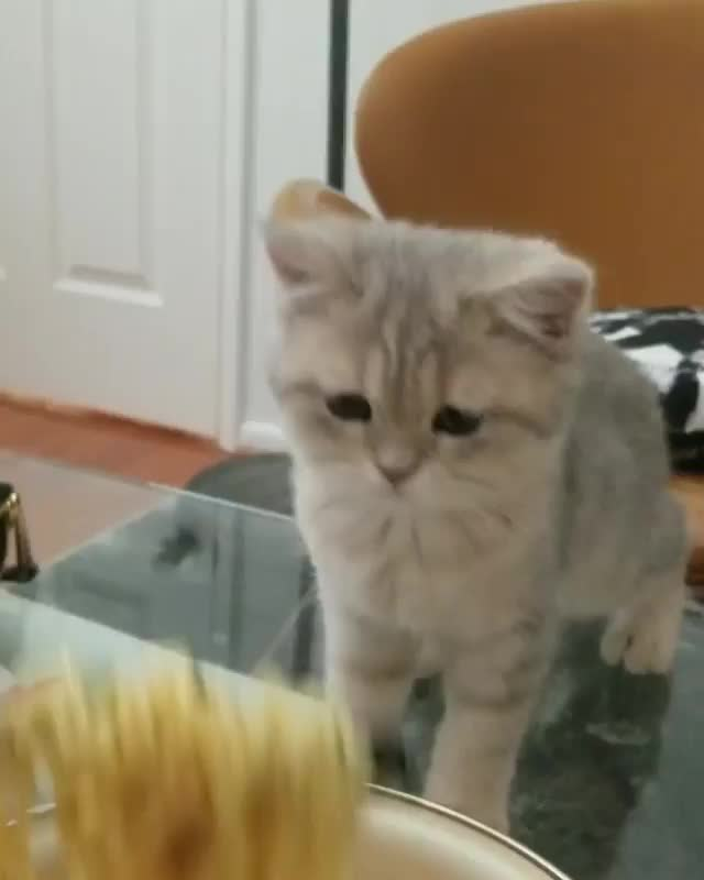 Video by chibim.is.cat GIFs