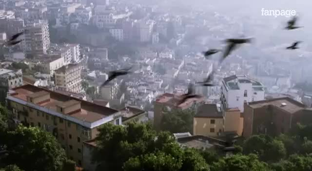 Watch and share Napoli In 4k GIFs on Gfycat