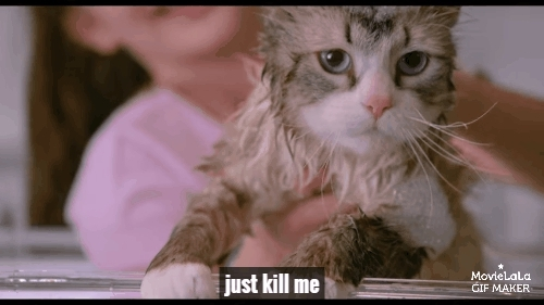catreactiongifs, gifs, ninelivesmovie, Nine Lives Trailer GIFs