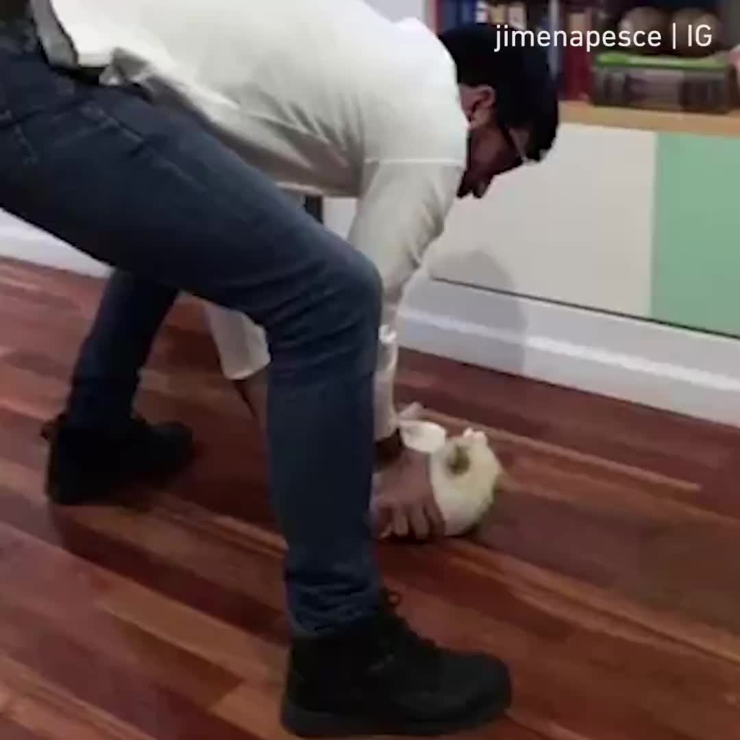 cat, cats, Sweeps the floors. Save money on brooms By fb.com/jime.pesce GIFs
