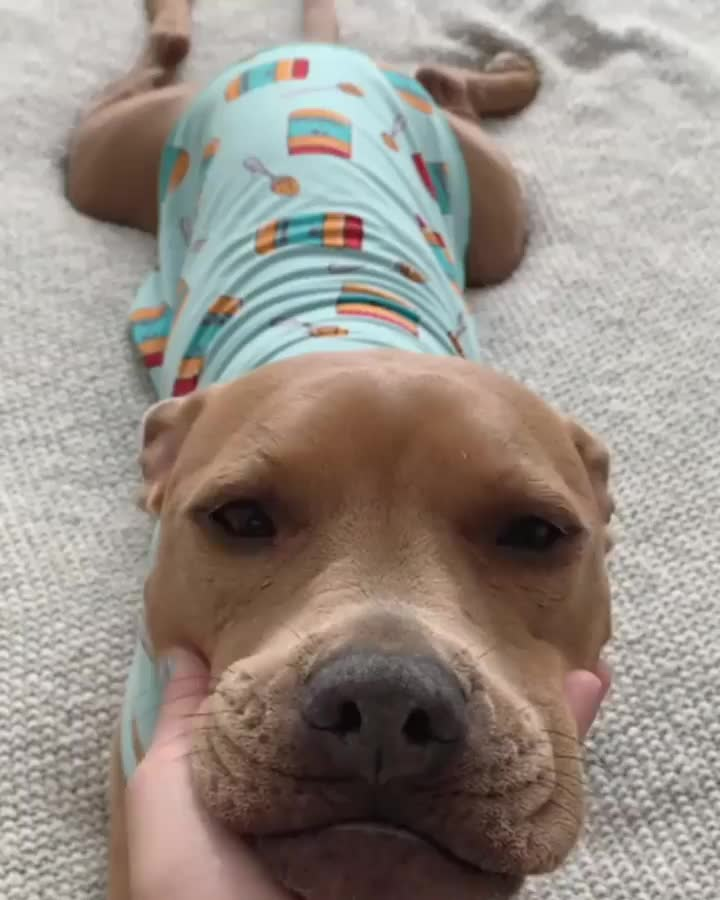 dog, Wesley heard you needed something to brighten your day, he's here to offer soft smiles GIFs