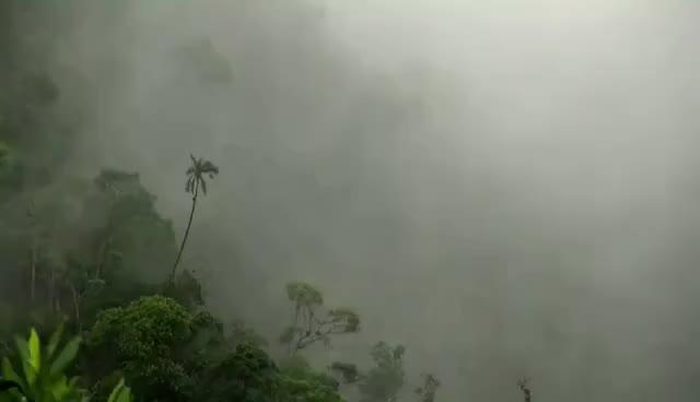 Watch and share Características De Los Bosques De Niebla (El Retiro - Antioquia) - TvAgro Por Juan Gonzalo Angel GIFs on Gfycat
