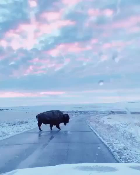 Watch and share Wilderness Tones GIFs by vani  on Gfycat