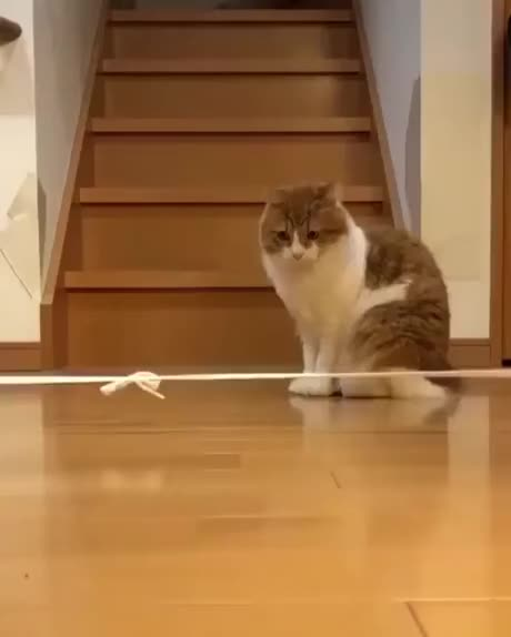Watch and share Jealous GIFs and Cats GIFs by esberat on Gfycat