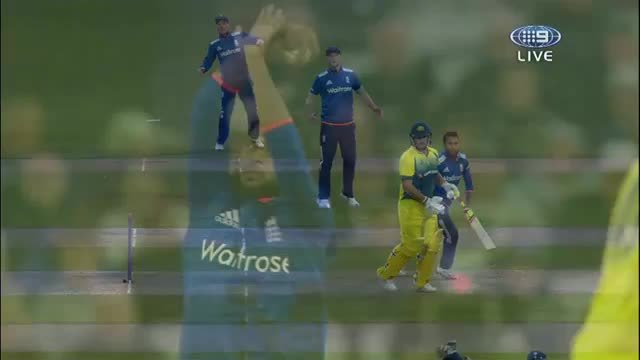 cricket, nicecatch, Finn's one handed catch. (reddit) GIFs