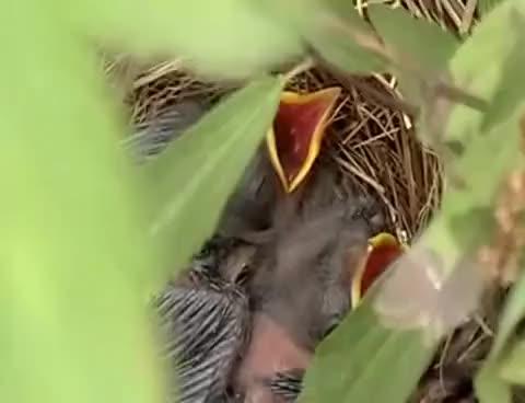 Watch birds GIF on Gfycat. Discover more bird GIFs on Gfycat