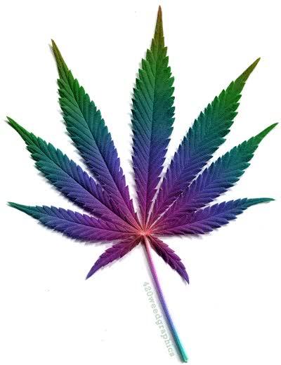 Watch and share Marijuana GIFs on Gfycat