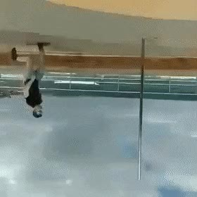 Watch SleepyConfusedBordercollie-upsidedown GIF on Gfycat. Discover more related GIFs on Gfycat
