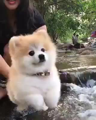 awww, bark, cute, dog, doggy, programmerreactions, puppers, swim, swimmer, swimming, typing, woof, swimming GIFs