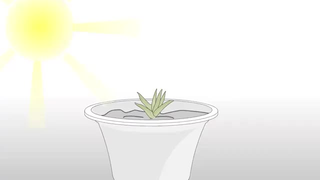 Watch and share Grow An Aloe Plant With Just An Aloe Leaf Step 16.360p GIFs on Gfycat