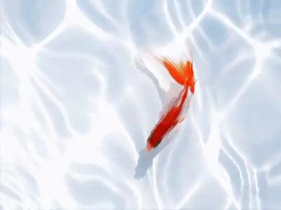 Watch and share Fish Favim Com GIFs on Gfycat