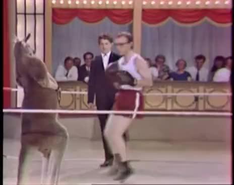 Watch Woody Allen vs. canguro GIF on Gfycat. Discover more Woody Allen, boxeo, canguro GIFs on Gfycat