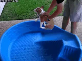 Watch Pools GIF on Gfycat. Discover more related GIFs on Gfycat