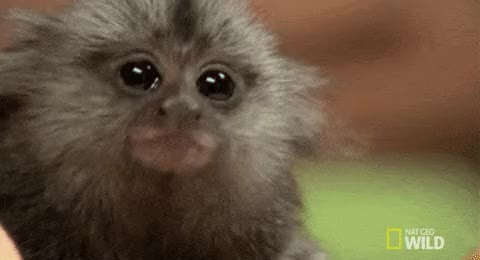 Watch and share Monkey GIFs on Gfycat