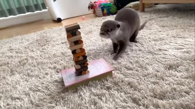 Watch and share 2019-11-04 19-58-20 GIFs by leapyear_for_science on Gfycat