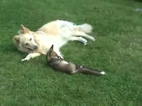 Watch and share Dogs Playing With Wild Fox Cub In The Woods GIFs on Gfycat