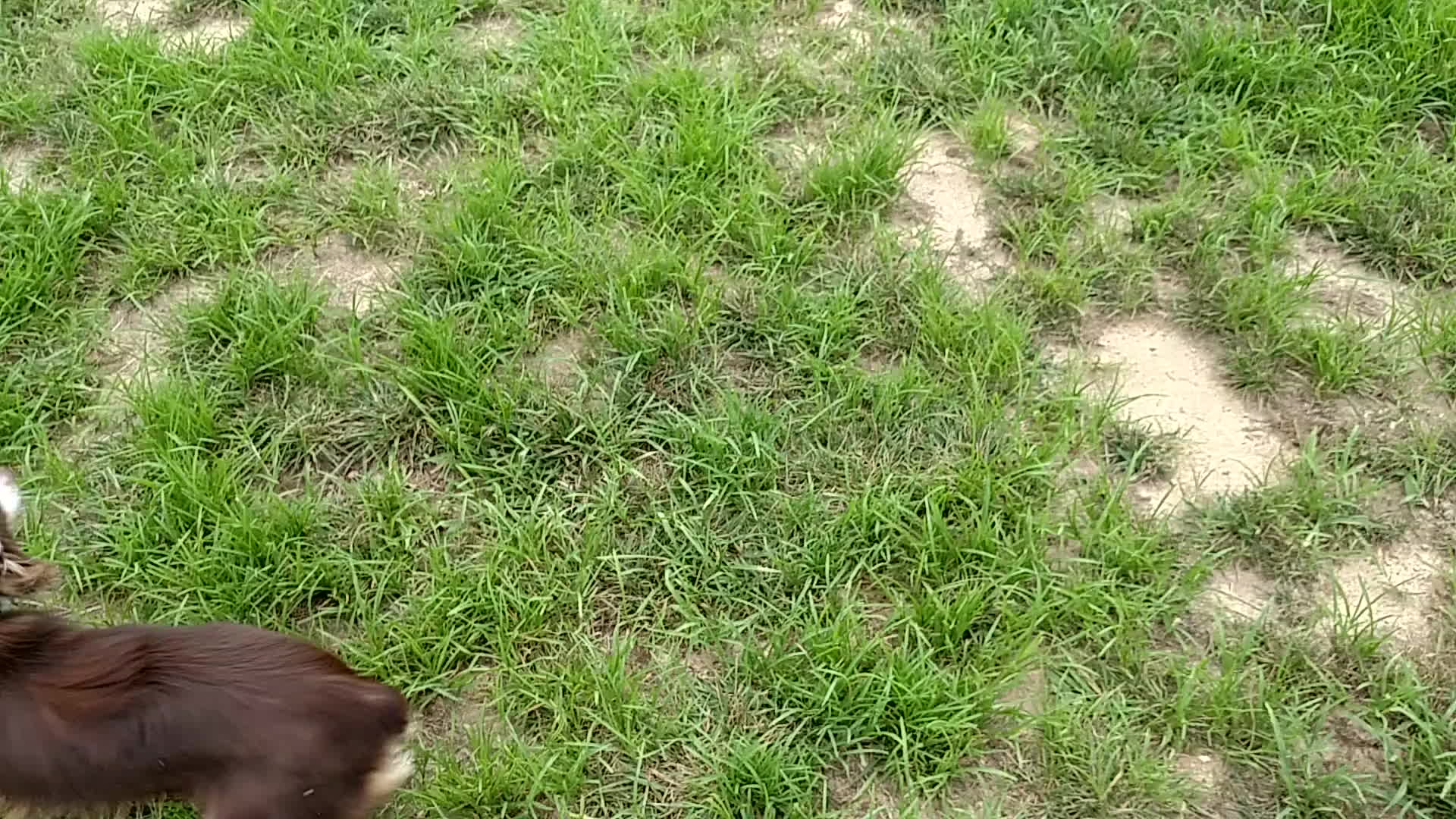 animalsbeingderps, wigglebutts, Just throw it already! GIFs