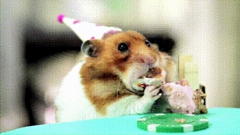 fun, happy birthday, party, Party GIFs