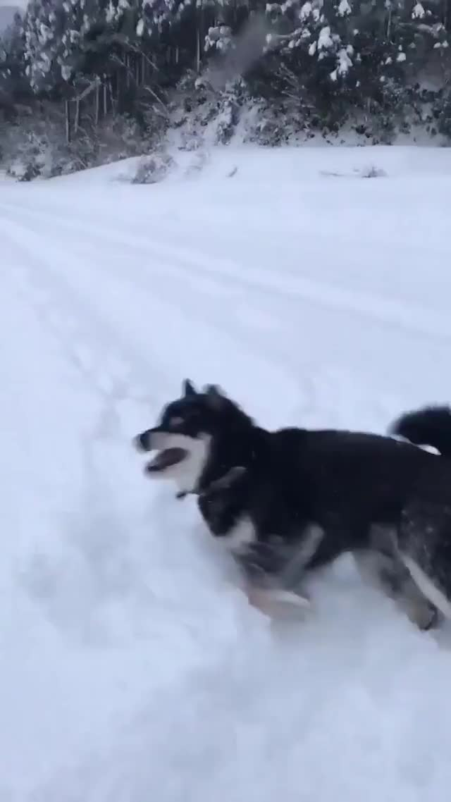 "Watch and share ""Come On, Throw The Snowball! ...Throw It! Throw It!"" GIFs on Gfycat"