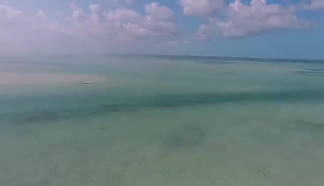Fly Fishing in the Bonefish Capital of the World; Andros, Bahamas GIFs