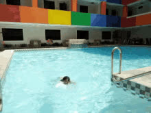 Swimming Swimming Pool GIFs