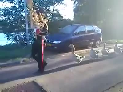 Watch and share Duck Marching Band GIFs on Gfycat