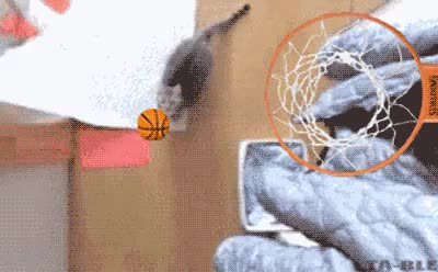 Watch and share Suck Suck Suck My Balls GIFs on Gfycat