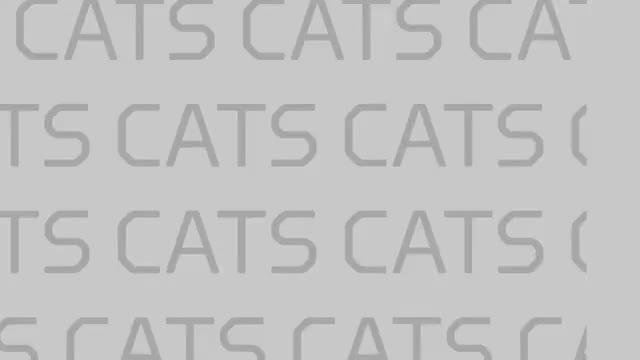 Watch and share Kentucky Basketball GIFs on Gfycat