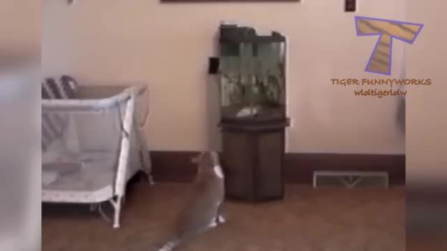 Watch Hitcat makes a tactical mistake GIF on Gfycat. Discover more related GIFs on Gfycat