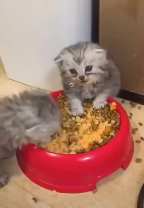 Watch and share Kucing GIFs and Funny GIFs by lehobabet on Gfycat