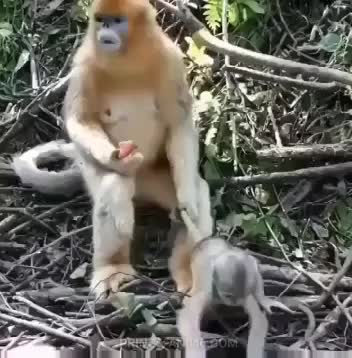 Watch and share Baby Brother GIFs and Hold Me Back GIFs by Cindy046  on Gfycat