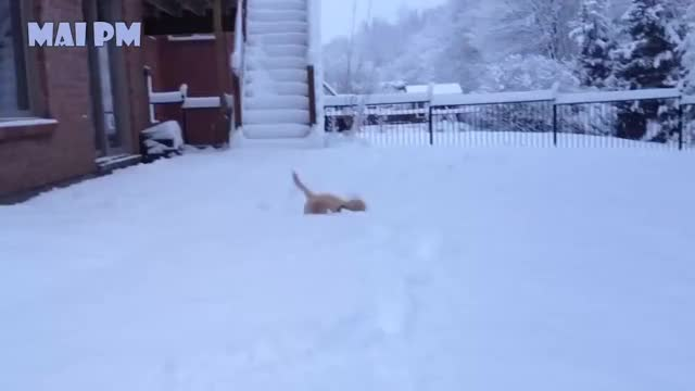 Watch and share Golden Retriever GIFs on Gfycat