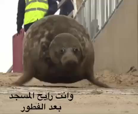 Watch and share VID-20180517-WA0013 GIFs by Sarieh Mohammed on Gfycat