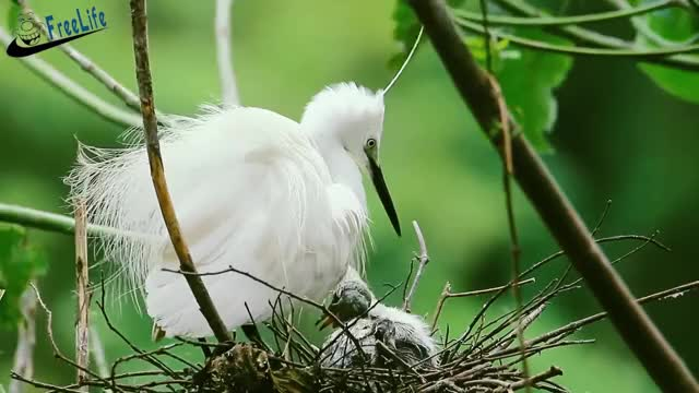 Watch Wild birds and their babies names GIF on Gfycat. Discover more beautiful birds, bird calls, bird names, bird species, birds, birds and their babies, birds and their babies names, feeding wild birds, names of bird species, wild birds GIFs on Gfycat