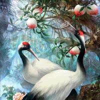 Hermosas Aves GIFs