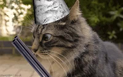 Conspiracy Cat GIFs
