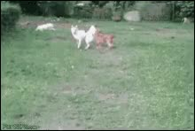 Watch Dog Hedge GIF on Gfycat. Discover more related GIFs on Gfycat