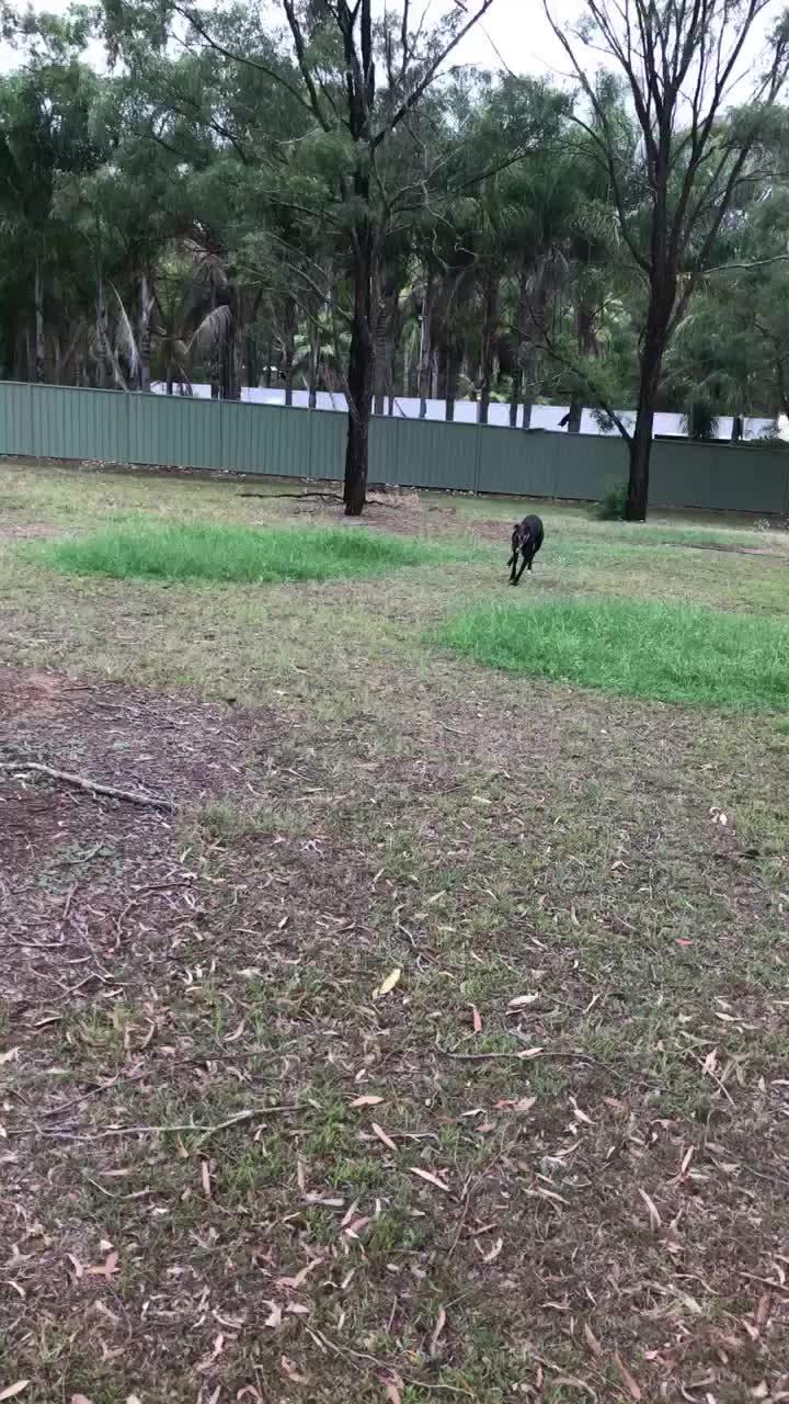 Greyhounds,  GIFs