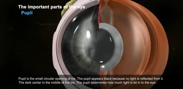 Watch and share Y2mate.com - The Human Eye NbwPPcwknPU 360p GIFs by Lili M. on Gfycat