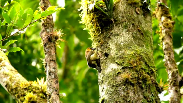 Watch and share Prong-billed Barbet GIFs by likkaon on Gfycat