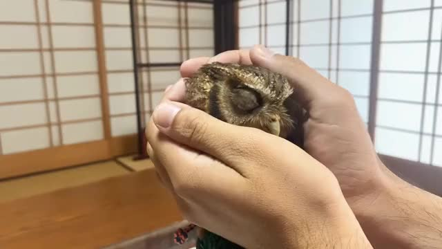 Watch and share Cute Little Owl GIFs by Helium Tube on Gfycat