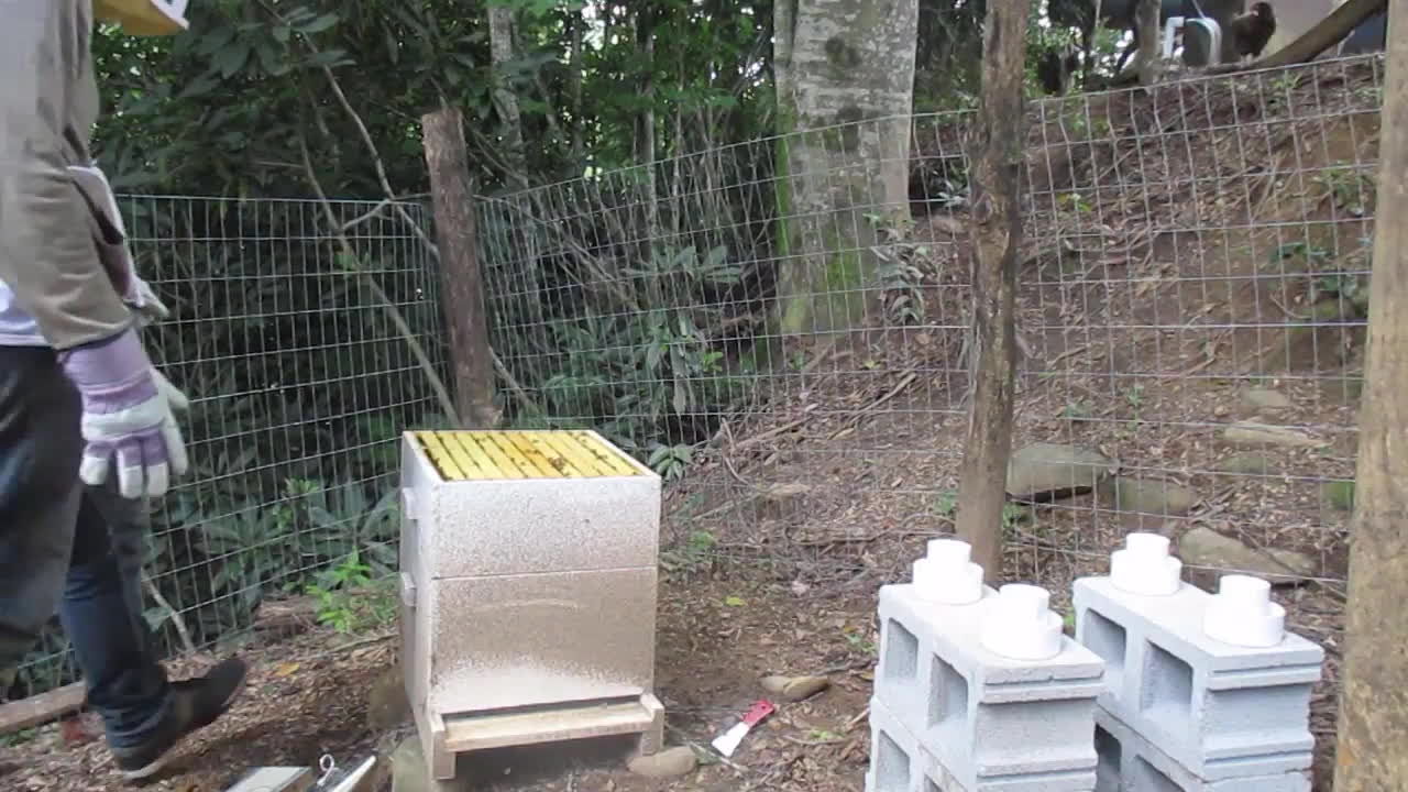 bee attack, bees, honeybees, Honey bees attack! GIFs