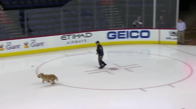 hawwkey, doggo in empty verizon GIFs