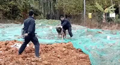 Watch K-9 Units are some of the best trained dogs in the world. GIF on Gfycat. Discover more Chris_Isur_Dude GIFs on Gfycat